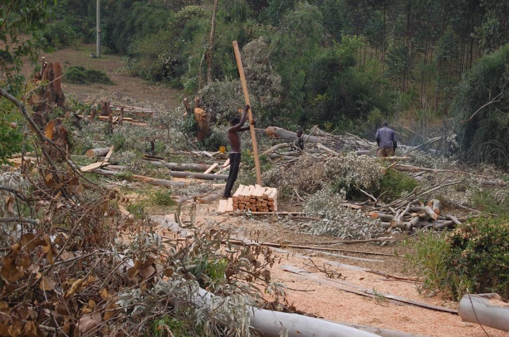 The land in question that is occupied by trees which are being cut.