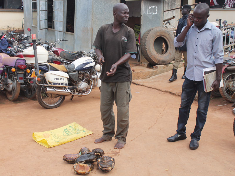 Omony (L) at Gulu Central Police Station with the tortoises. On the phone is Marcelo Okoya. Denis Okema,