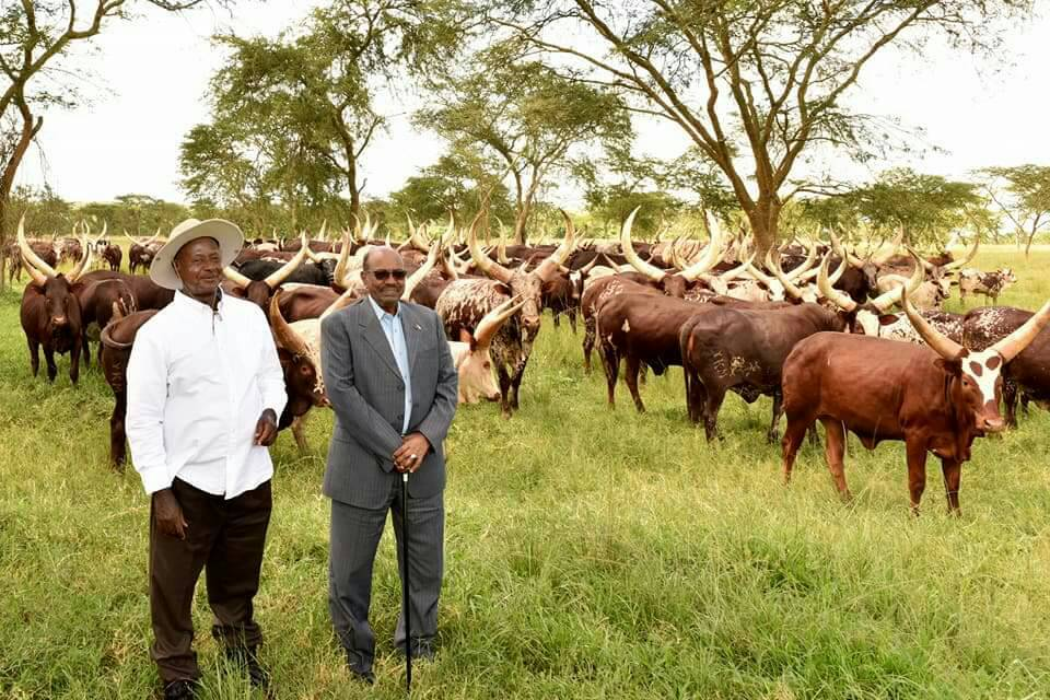 President Museveni with Mr. Bashir during a tour of the Kisozi farm in Gomba district. (PHOTO/FILE)