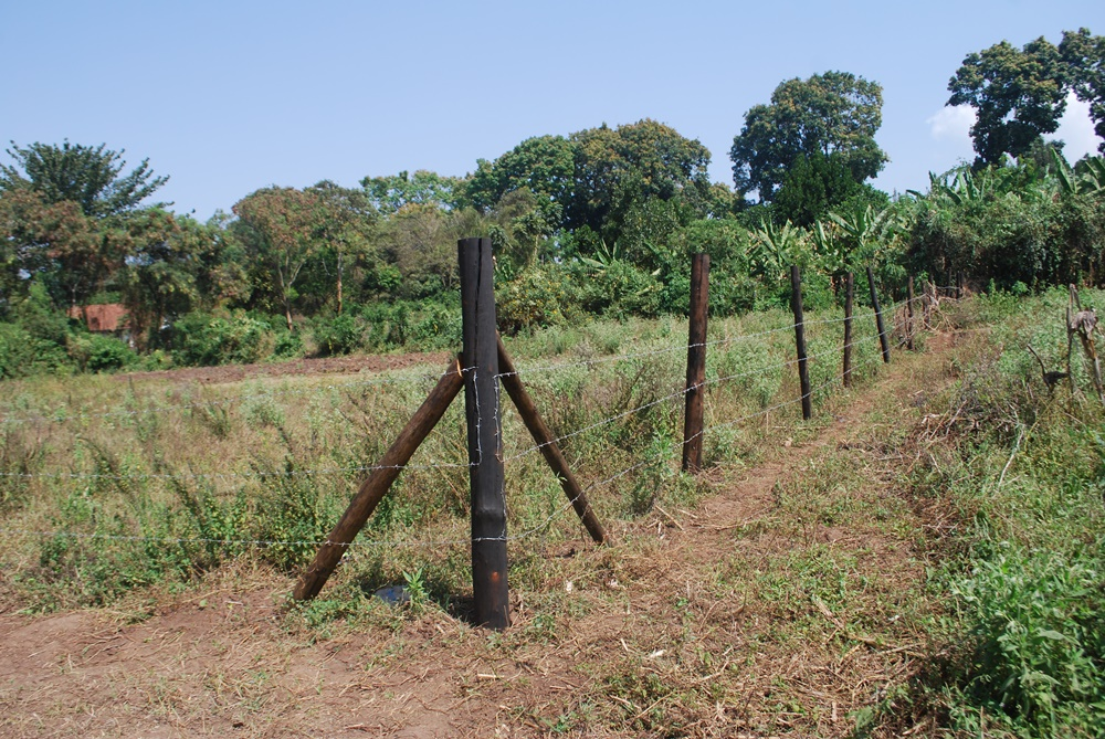 Part of church land that has been fenced off by unknown people in Mbale municipality using forged land documents from Mbale lands registry David Mafabi