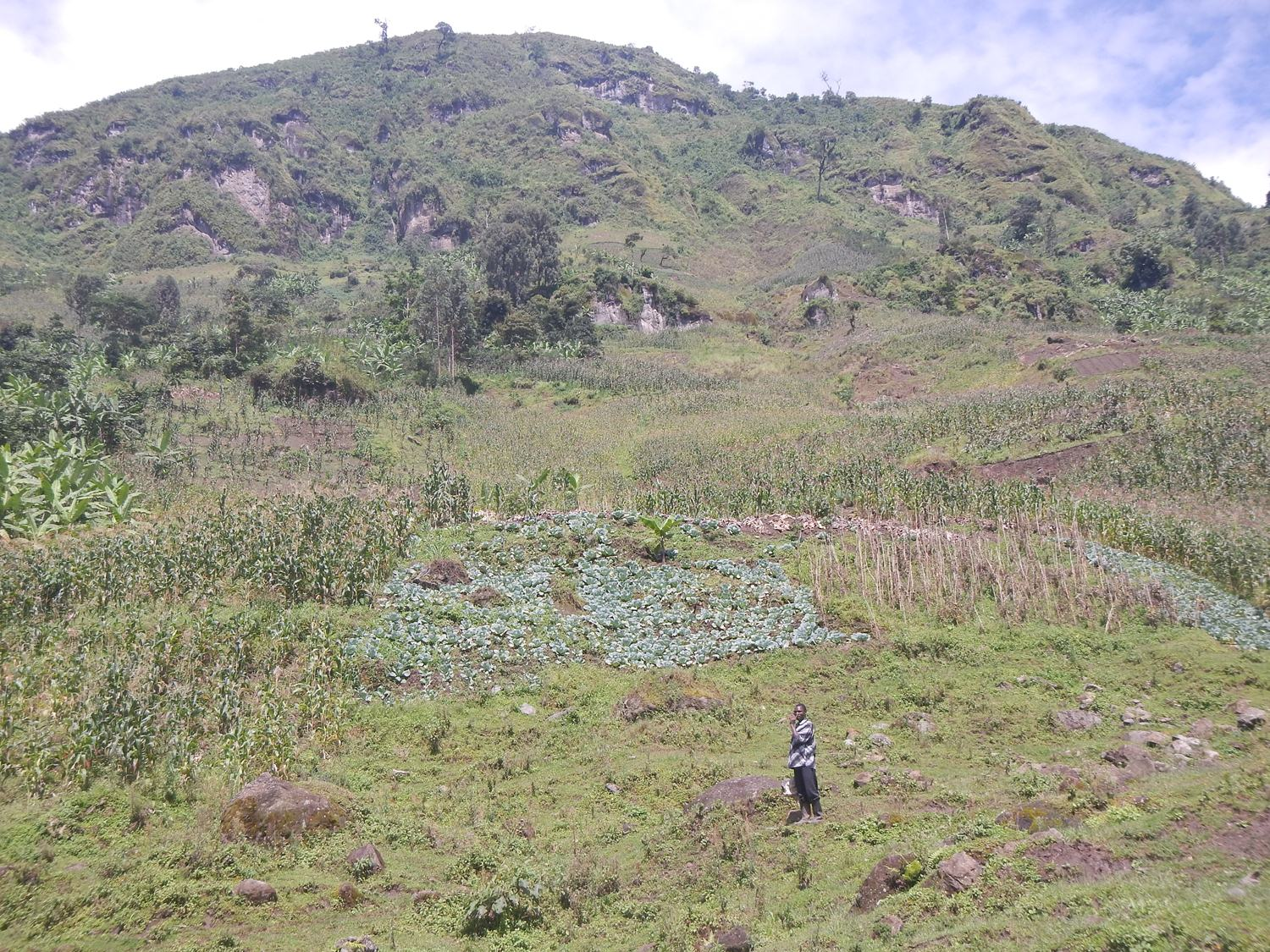 Farming up the ridge in Nametsi, Bududa District, the scene of the 2010 landslide scar that killed over 250 people.