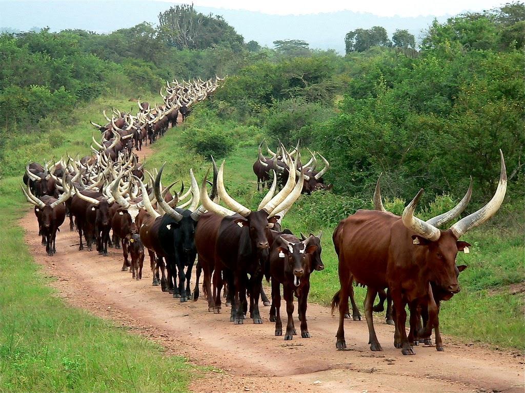 Balaalo herdsmen