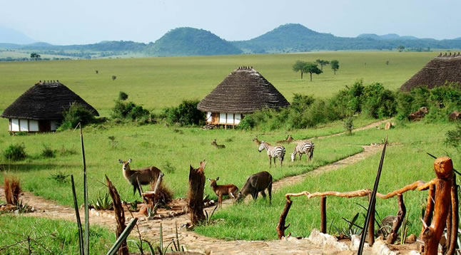 Animals feed around Apoka Safari Lodge in Kidepo Valley National Park.(FILE PHOTO)