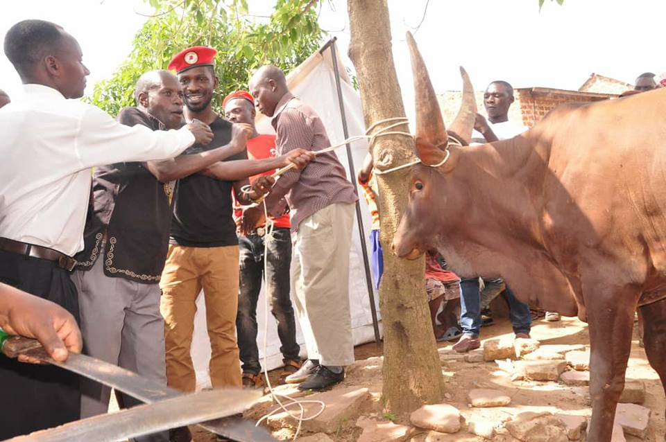 Kyadondo East MP Robert Kyagulanyi aka Bobi Wine has put a smile on the face of Lisanja residents; delivering them several items including a cow (PML Daily PHOTO)