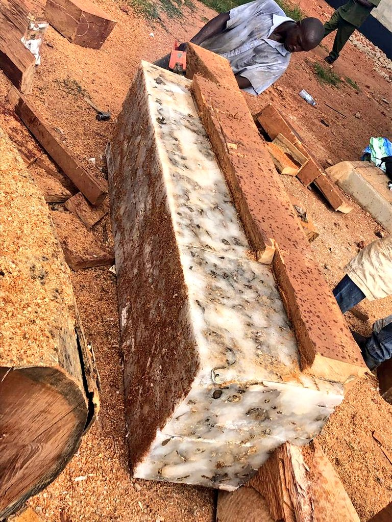 The elephant tusks were concealed in timber/wood ferried on the intercepted trucks (URA PHOTO)