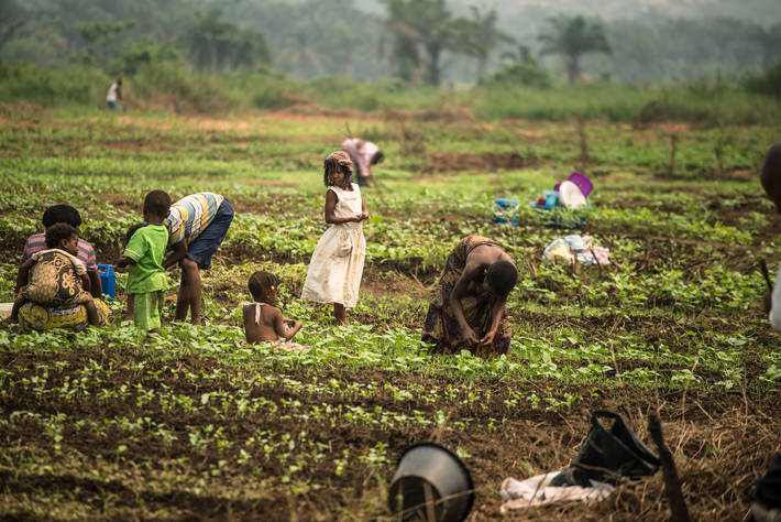 In the Democratic Republic of Congo, FAO aims to help 1.8 million crisis-hit populations restore their livelihoods and enhance food production. (FAO PHOTO)
