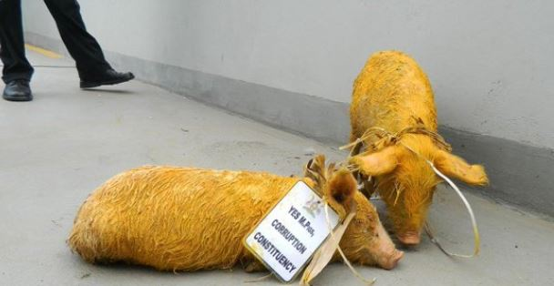 The jobless brotherhood duo is unleashed piglets at Parliament in 2015 (FILE PHOTO)