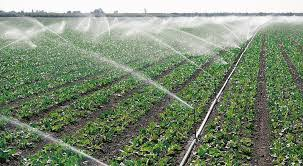 Irrigation system rarely used used in Uganda. (PHOTO/FILE)