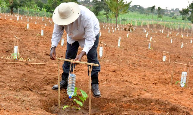 President-Museveni-demonstrating-drip-irrigation-at-the-Kityerela-Presidential-Demo-Farm-Mayuge.