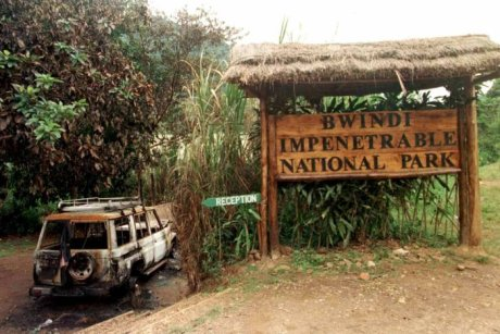 Eight tourists died at the Bwindi Impenetrable National Park in Uganda. (PHOTO/Courtesy)