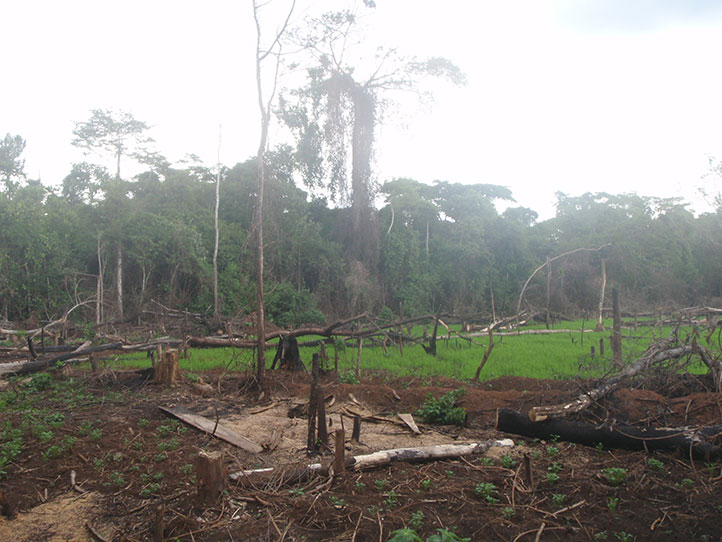 A section of the  highly deforested Bugoma forest. (FILE PHOTO)