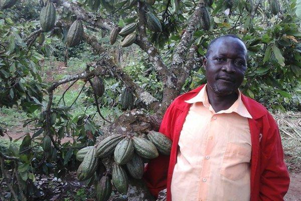 Michael Zagenda (R) in a cocoa garden