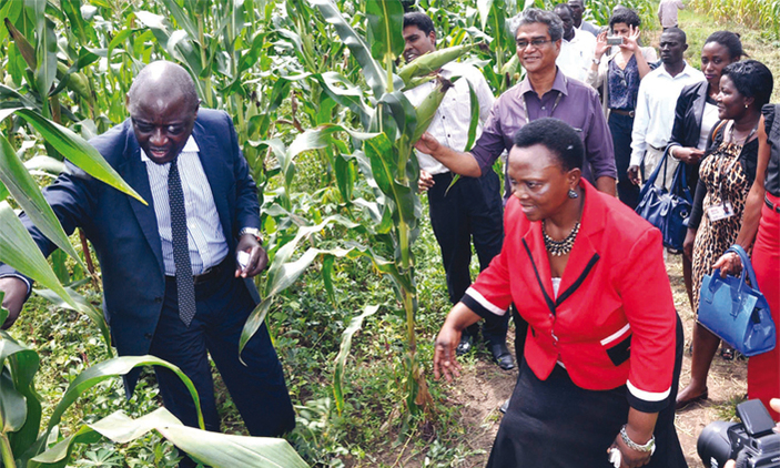Agriculture minister, Vincent Ssempijja takes guests and agriculturalists on a tour of a maize plantations recently (PHOTO/File)