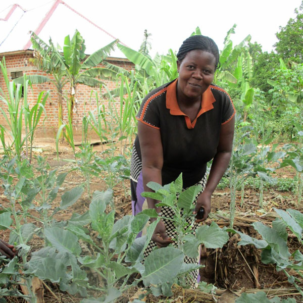 A woman attends to her organic garden. (PHOTO/QSA)