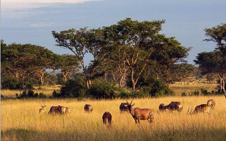 Queen Elizabeth National Park. (PHOTO/File)