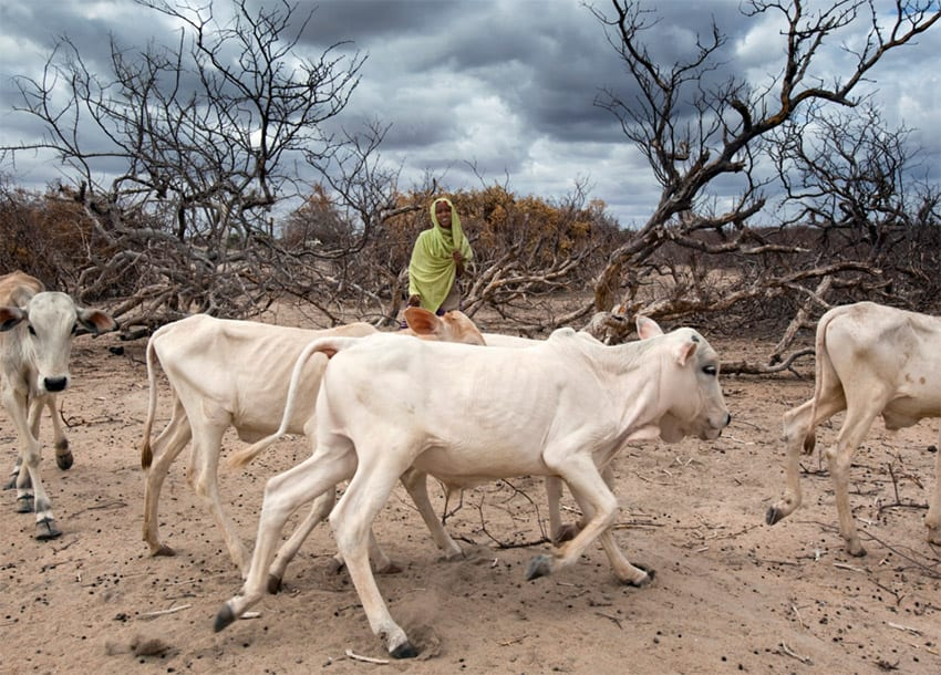 Hundreds of pastoralists Uganda suffer drought bites in recent past. (PHOTO/File)