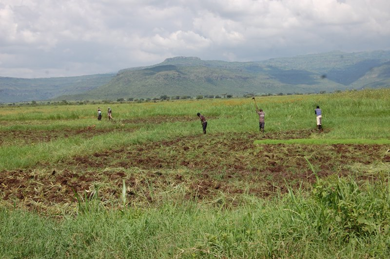 Rice growers prepare their gardens in Ndaiga wetland along River Malaba Iyolwa section in Tororo district. Photo by Joseph Omollo