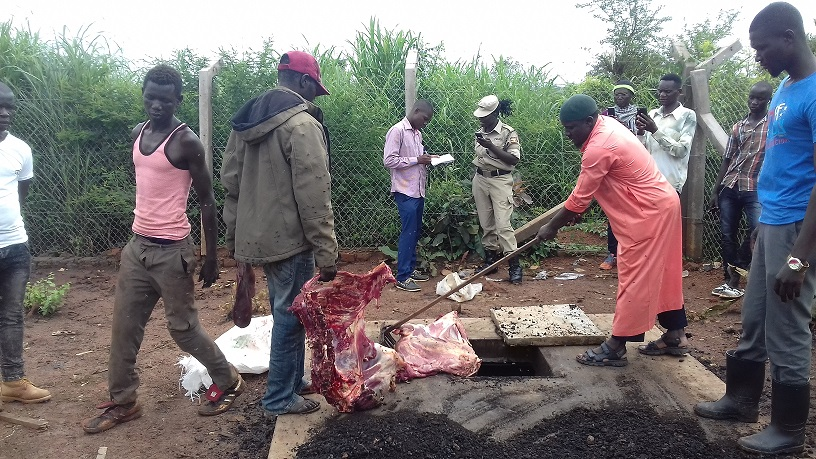 Sheikh Ismail Ali Omona, Imam of Jamia mosque in Gulu town dragged the carcass into the shock pit at Gulu Municipal abattoir