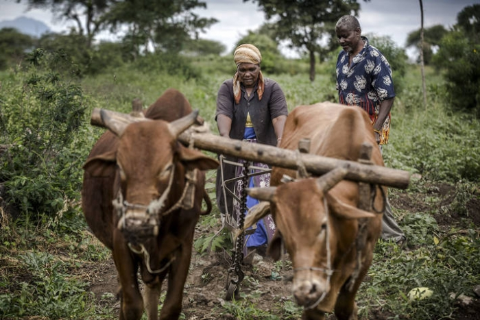 Africa's food and agriculture sectors are among the most vulnerable to the negative impacts of climate change. Small-holder farmers, small entrepreneurs, and their families, whose livelihoods depend on rain-fed agriculture, are most threatened by climate change. (PHOTO/File)