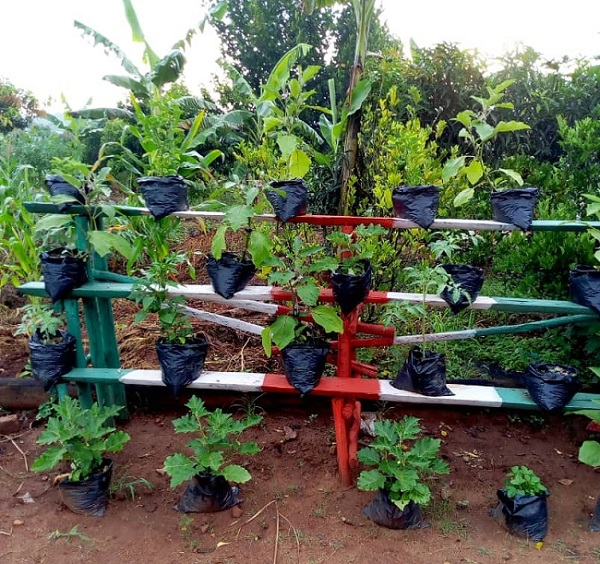 The farm also recycle non-biodegradable rubbish like polythene and plastics for micro gardening. (PHOTO/Javira Ssebwami)