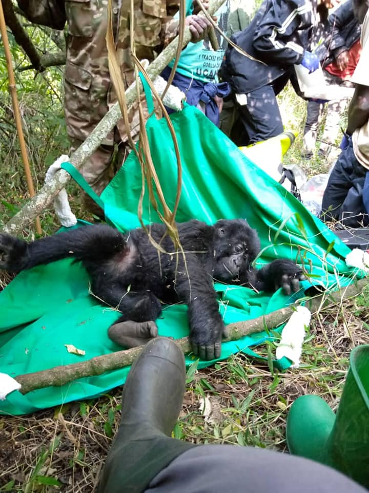 UWA doctors have rescued a toddler Golirra. (PHOTO/Courtesy)