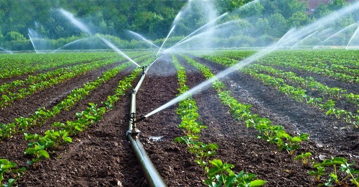 Irrigation system rarely used in Uganda. Parliament has approved a loan to set up irrigation project (PHOTO/FILE)