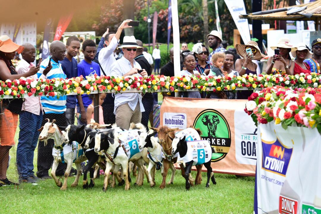 Revellers having fun as the goats raced away (PHOTO/PML Daily).
