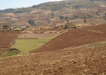 The shocking view of Mt Elgon land in Kween district cleared for growing Barley, Wheat and Irish potatoes, the environment has been left bare. David Mafabi