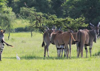 Fortierment Adventures at Lake Mburo National Park is on this Friday (PHOTO/File).