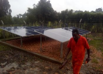 And solar panels to run irrigation. Photo by Micah