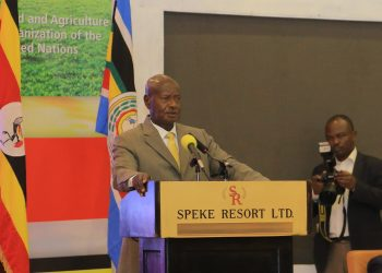 President Yoweri Museveni has blocked rice growing in Swamps (PHOTO/Javira Ssebwami).