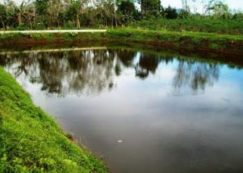 six-year-old boy drowned in a pond in Nsambya village, Mutima Sub-county in Sembabule District
