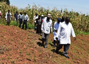 Dr. Lwasa and the student on Maize leads farmers to the study sites at MUARIK (PHOTO/Courtesy)