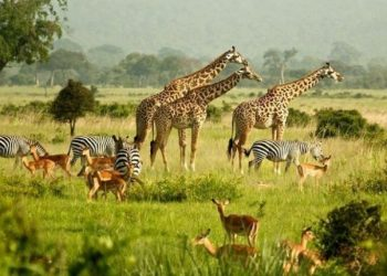 Uganda to commemorate Wild life day