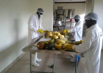 pineapple factory in Ntungamo