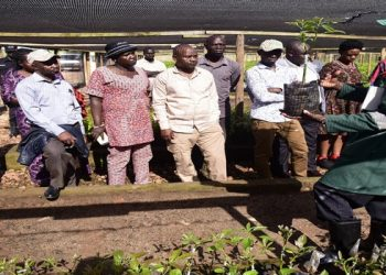 One of the workers on the farm shows MPs a variety of avocado (PHOTO/Courtesy)