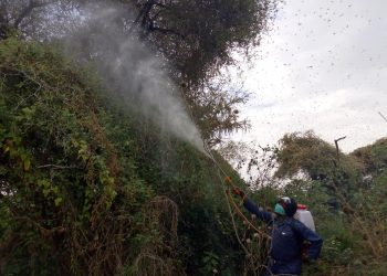 Spraying of desert locusts continues in Amudat. The swarms 'attacked' Uganda in 2020 and are said to be in neighbouring Kenya (PHOTO/File)
