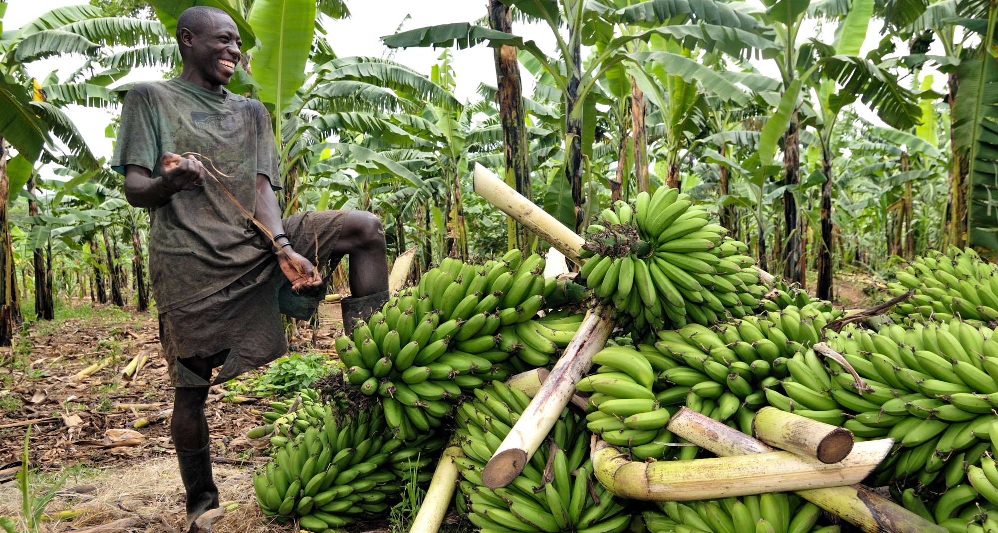 Farming is the biggest income generating sector in Africa (PHOTO/Courtesy).