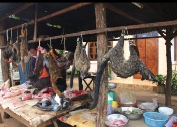 The origins of coronavirus are thought to have originated from a wet market in Wuhan, China, where wild animals were sold (PHOTO/Courtesy)