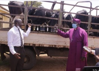 The RDC Mukono Fred Bamwine handing over the cows to the Bishop Mukono Diocese James Ssebaggala