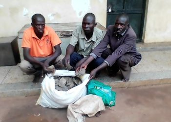 The suspects parraded at the central police station in Kiryandongo district on Sunday (PHOTO/Opolot Jonathan).