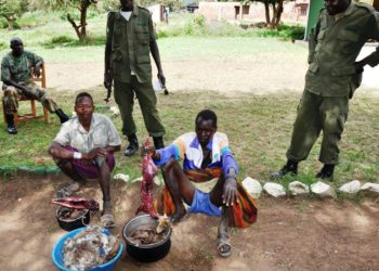 UWA rangers parrading the arrested Karamojong poachers with killed wild animals in Moroto last week (PHOTO/Jonathan Opolot)