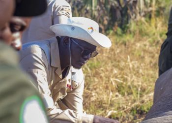 0558 – David undertaking an elephant collaring exercise in Murchison Falls National Park earlier this year 0761 – David Ochanda