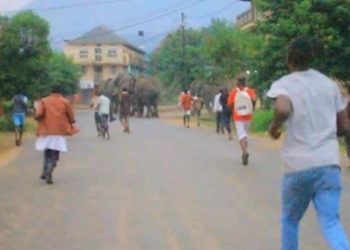 Elephants from Queen Elizabeth National Park stormed Kasese town (PHOTO/Courtesy).