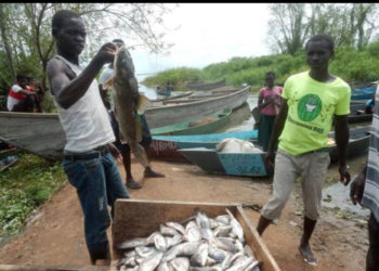 Goverment had earlier suspended fishing on lake Kyoga due to fish depletion (PHOTO/File).