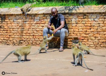 Uganda Tourism ambassador Eddy Kenzo feeding monkeys in one of the parks (PHOTO/Courtesy).