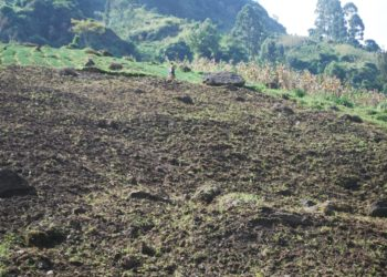Farming at Mt Elgon national park. The Encroachers have gone beyond t and leaving people in danger of diseases (PHOTO/David Mafabi).