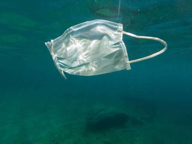 Discarded face masks may be mistaken by sea creatures for prey and eaten.