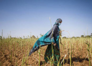 Fatuma Abdi Dalmar has been a farmer all her life in Ethiopia. Her crops were devastated by Desert Locusts (PHOTO/Courtesy).