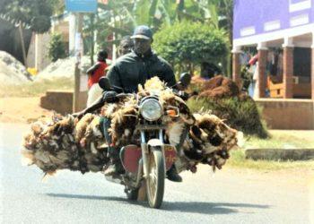 A boda boda carrying chicken. (PHOTO/File)